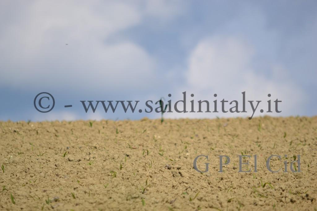 Percorsi naturalistici in Italia Pino Tor. 021 by G P El Cid - Said in Italy 12012 05 06  054