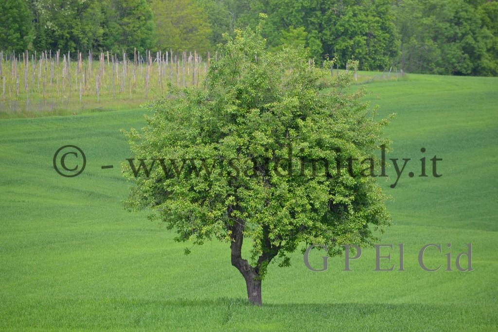 Percorsi naturalistici in Italia Pino Tor. 021 by G P El Cid - Said in Italy 22012 05 06  019