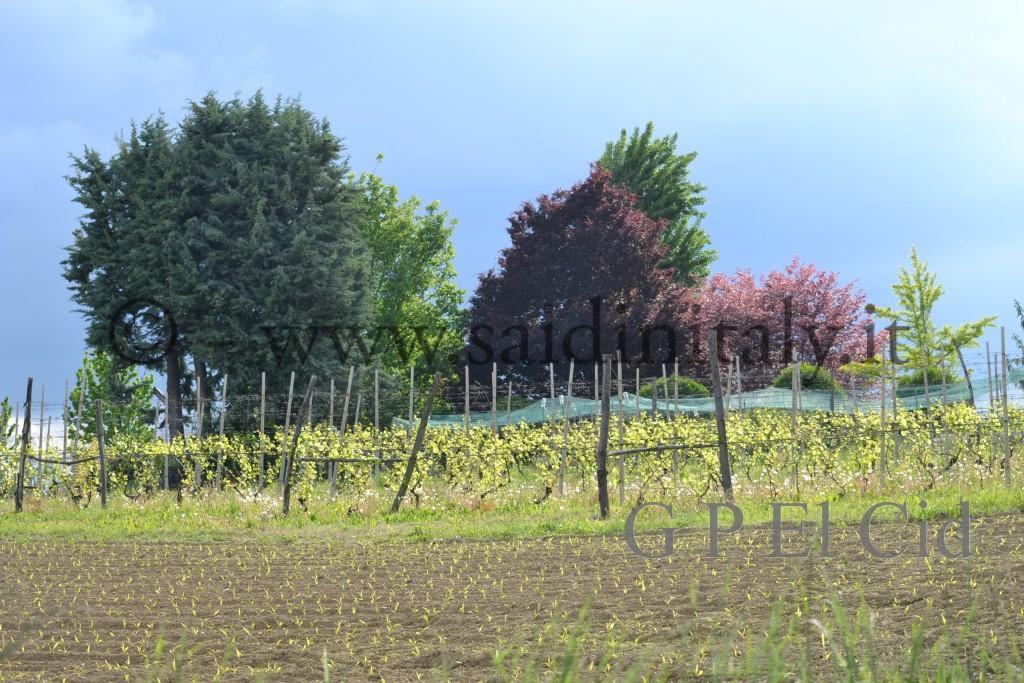 Percorsi naturalistici in Italia Pino Tor. 021 by G P El Cid - Said in Italy 32012 05 06  085