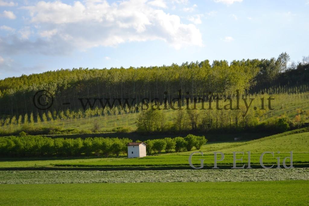 Percorsi naturalistici in Italia Pino Tor. 021 by G P El Cid - Said in Italy 42012 04 08  Lang Rodd 104