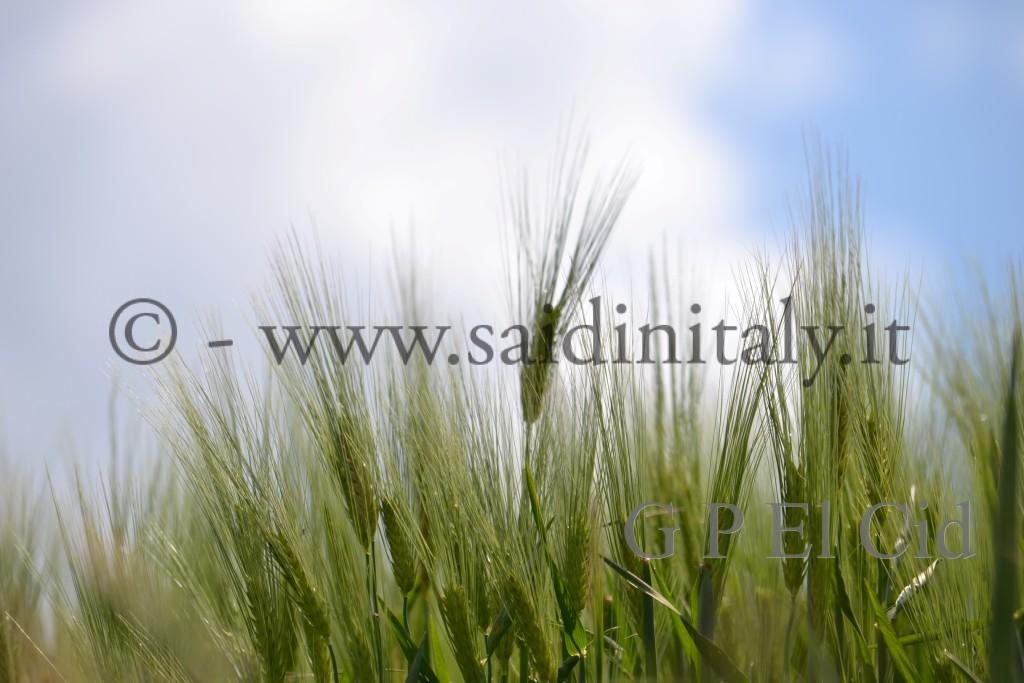 Percorsi naturalistici in Italia Pino Tor. 021 by G P El Cid - Said in Italy 62012 05 06 020