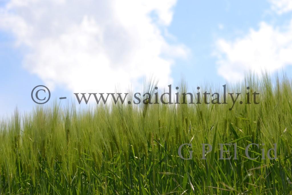 Percorsi naturalistici in Italia Pino Tor. 021 by G P El Cid - Said in Italy 72012 05 06 021
