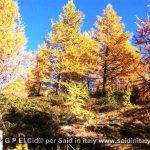 G P El Cid per Said in Italy blog 2015 2010 10 18 Valgrisenche e Aosta 023
