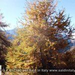 G P El Cid per Said in Italy blog 2015 2010 10 18 Valgrisenche e Aosta 027