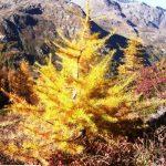 G P El Cid per Said in Italy blog 2015 2010 10 18 Valgrisenche e Aosta 075