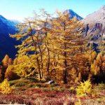 G P El Cid per Said in Italy blog 2015 2010 10 18 Valgrisenche e Aosta 079