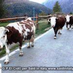 G P El Cid per Said in Italy blog 2015 2010 10 18 Valgrisenche e Aosta 117