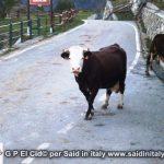 G P El Cid per Said in Italy blog 2015 2010 10 18 Valgrisenche e Aosta 119