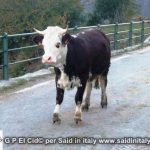 G P El Cid per Said in Italy blog 2015 2010 10 18 Valgrisenche e Aosta 123
