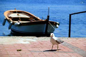Gabbiano e barca