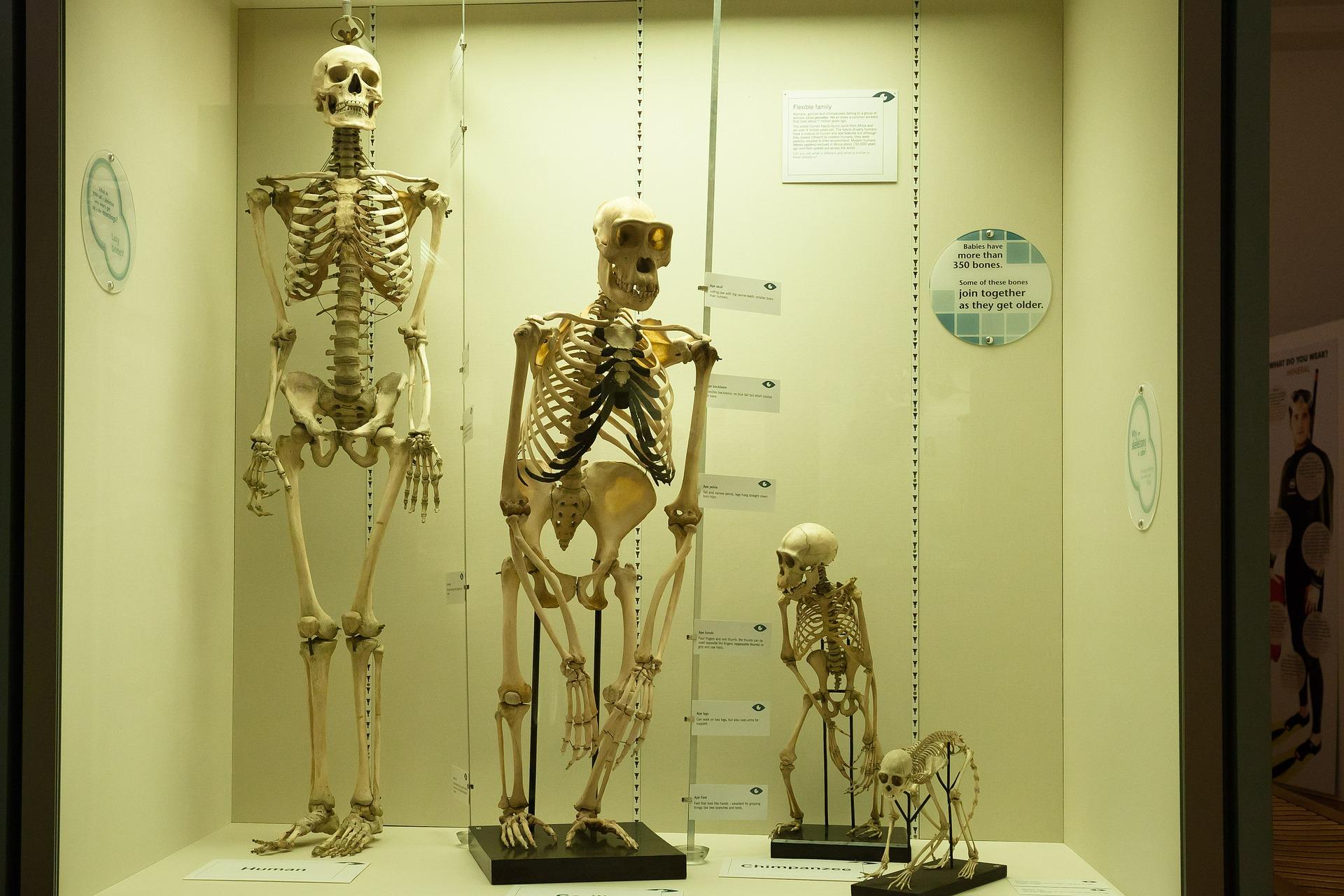 skeleton-414543_1920