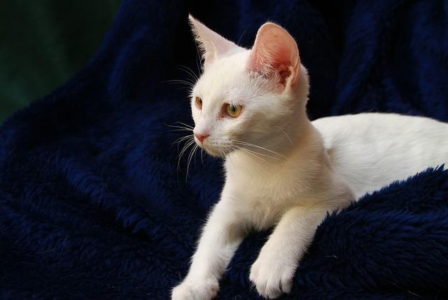 Immagine di un gattino che fissa qualcosa drizzando le orecchie.