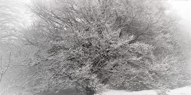 Alceo, i rimedi contro il freddo